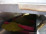 Draining the winepress