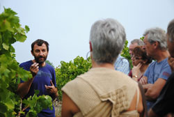 Tours of the winery and vineyards for wine tourism