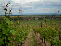 Spiegel's vineyard  Grand Cru for wine tourism