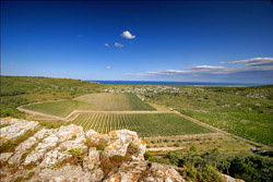 Overview on the vineyard of l'Hospitalet