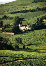 Wine tourism at château Thivin