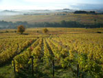 The vines are involved in the beauty of landscapes