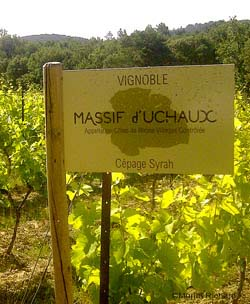The vineyards of Uchaux Massif is composed of 22% Syrah