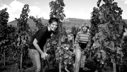 A vineyard for wine tourism